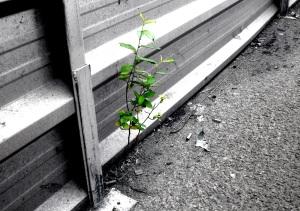 planta brillo
